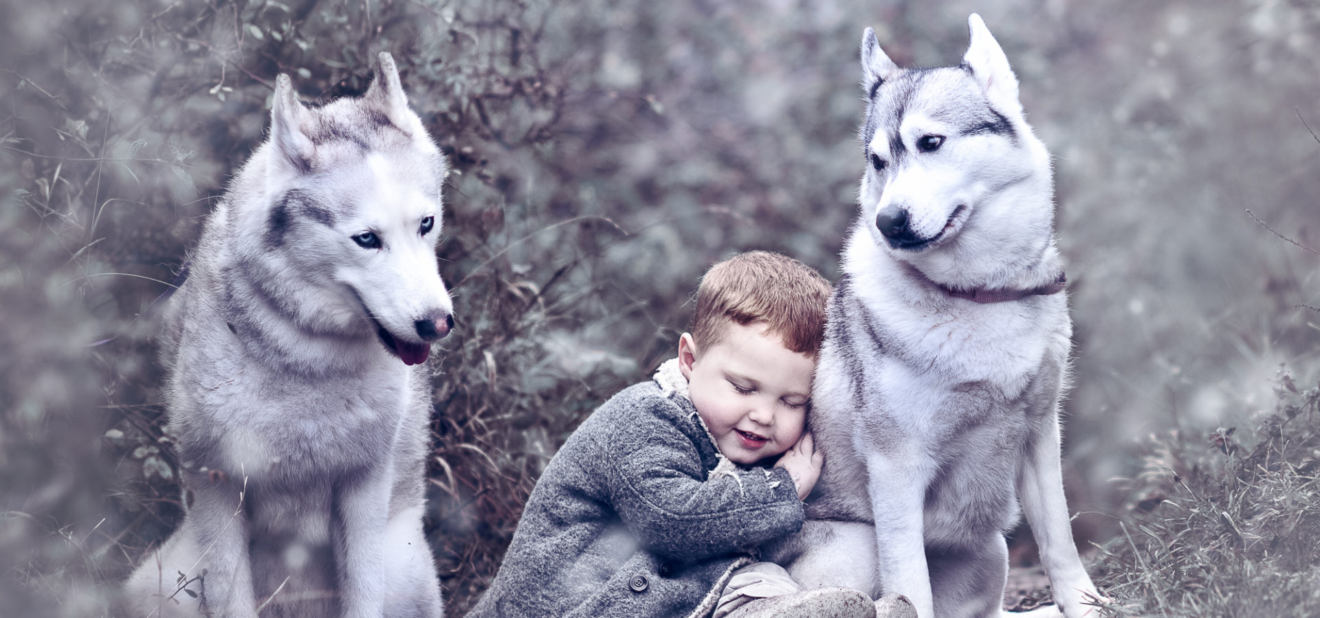 Heydon-Huskies-Edit-Edit-Edit-Edit-Edit